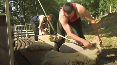 Sheep shearers are worried about a shortage of foreign workers because of quarantine rules.