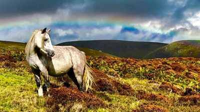 Photographers are urging people to treat the ponies with respect