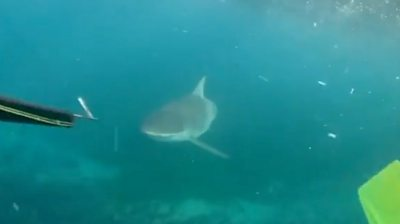 A shark swims near a spear and flippers