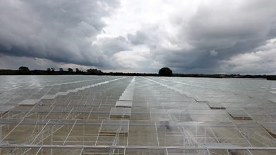Low Carbon Farming's greenhouse