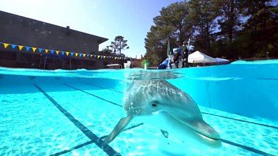 A robotic dolphin