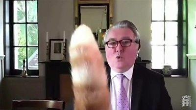 Rocco's tail and John Nicolson MP