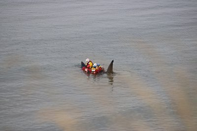 Lifeboat crew with basking shark