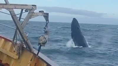 Fishermen stunned as whale breaches next to boat