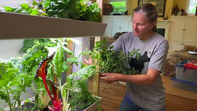 A woman using an indoor vertical farm