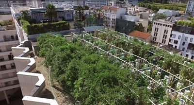 A company in Paris is transforming roofs and abandoned urban areas into spaces covered in plants.