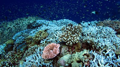 Coral reef with some bleaching