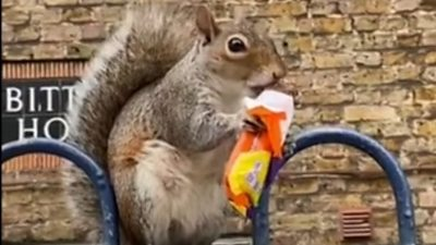 squirrel eating a chocolate bar