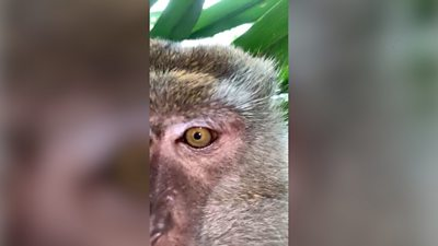Monkey appears to be filming itself on a mobile phone