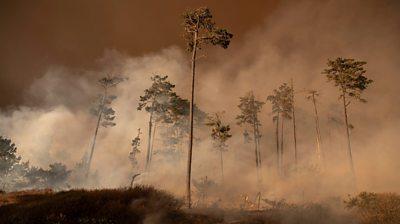 Wildfire smoke in California
