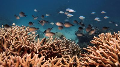 A file photo of fish in the Great Barrier Reef off the coast of Cairns, Australia