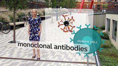 Rebecca Morelle and antibodies graphic