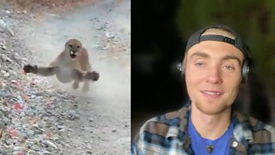 Composite image of cougar and Kyle Burgess