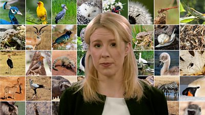 Reporter standing in front of collection of animals