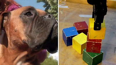 A composite image - A brown dog (L) and a robot stacking different coloured blocks (R)