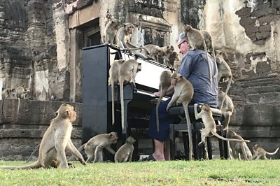 British musician Paul Barton plays the piano for monkeys that occupy abandoned historical areas in Lopburi, Thailand