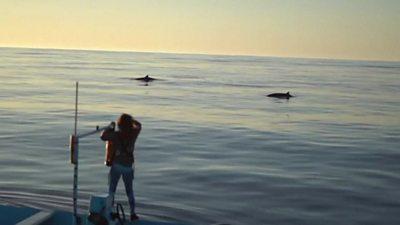 Whale reserachers