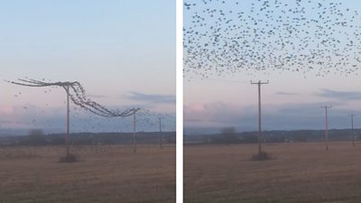 birds on cables