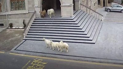 Animals caught on CCTV