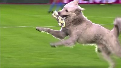 Dog invades football pitch in Bolivia thumbnail