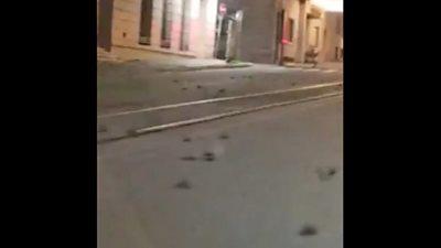 Dead birds on Via Cavour in Rome.
