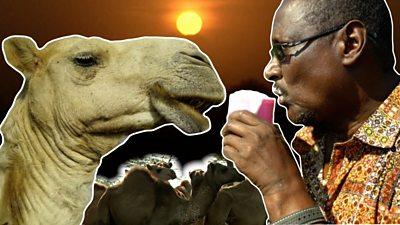 Camel milk business in Kenya thriving