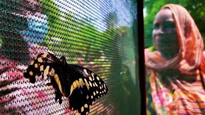 Swafiya Saidi and a butterfly