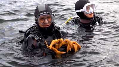 Diver holding northern pacific seastars