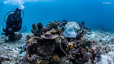 Coronavirus: Divers find Philippine reef covered with single-use face masks