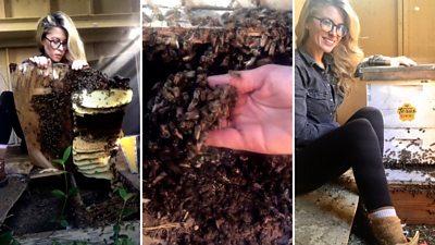 Erika Thompson saving bees