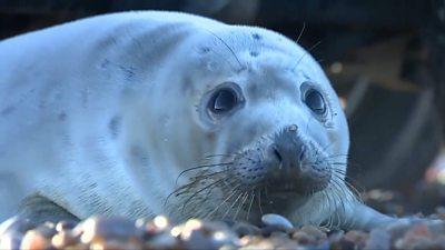 Close up of grey seal