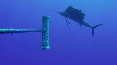 sword fish swimming next to crane