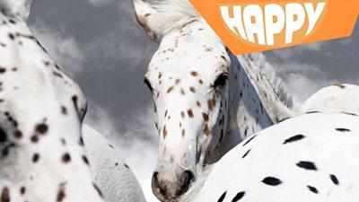 Leopard horses