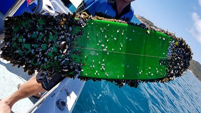 Surfboard covered in barnacles