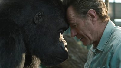 A scene from Disney's The One and Only Ivan - animated gorilla Ivan and Bryan Cranston have their foreheads touching