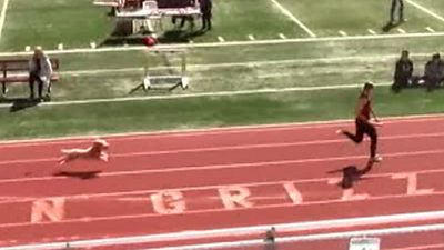 Watch: Moment pet dog runs on to high school race track and wins relay event thumbnail