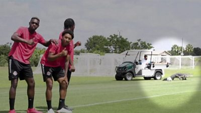 See you later! Alligator crashes Toronto FC's training session