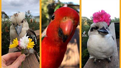 Three close ups of australian birds