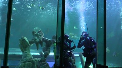 A reporter and aquarium staff at the bottom of a shark tank