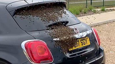 Bees swarming a car