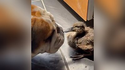 Dog and duck facing each other