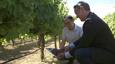 Prof Javen Qinfeng Shi (C) and Prof Andrew Lowe are in a vineyard looking at a tablet.
