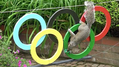 Squirrel climbing on Olympic rings