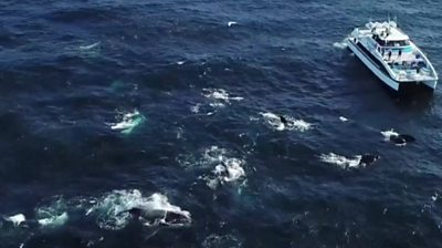 Megapod of whales