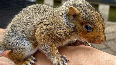 Paquito the squirrel