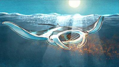 Manta ray, illustration
