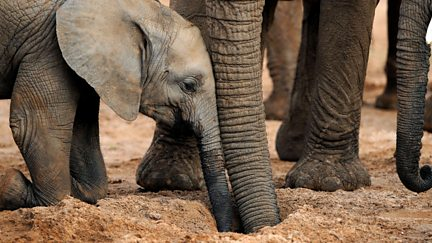 The Secret Life of Elephants