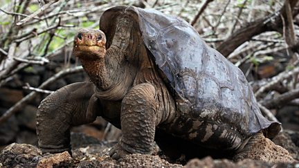 Lonesome George and the Battle for Galapagos