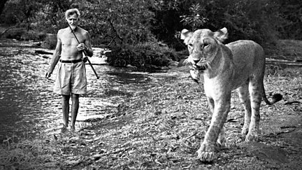 Elsa: The Lioness that Changed the World