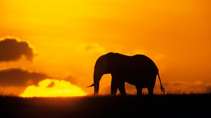 Tourism and the Truth: Kenya